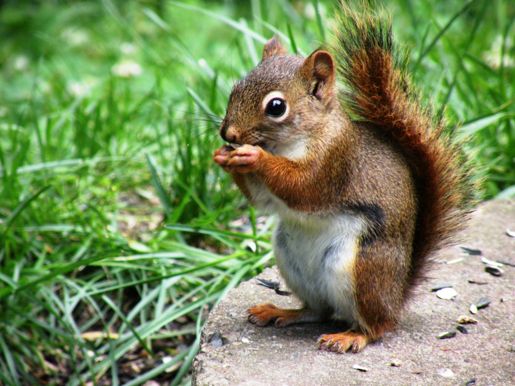 Mr Squirrel_4836034119_o
