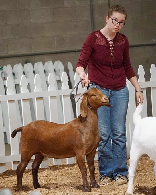 Summer Wins at State Fair With Her Goat Snickers